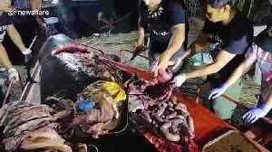 Dead Philippines whale had 40kg of plastic in stomach [Video]