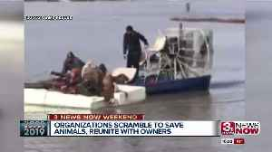 Dramatic animal rescue at Sycamore Farms [Video]