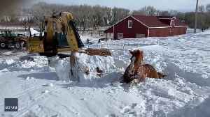 Trapped Horse Carefully Dug Out of Snow in Wyoming [Video]