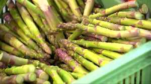 Eat asparagus? Brexit may hit British farms next [Video]