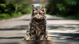 'Pet Sematary' Is A Worthy Remake Despite Spoiler Heavy Trailer [Video]