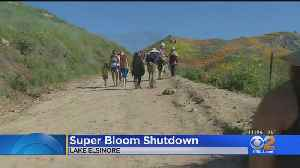 Canyon Reopens After Being Shut Down By Huge Influx Of Poppy-Seeking Crowds [Video]