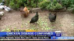 First case of Newcastle Disease found in Redwood City rooster [Video]