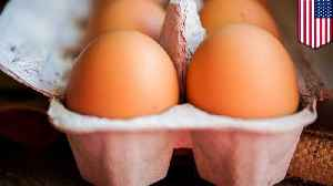 Eating too many eggs increases heart disease risk, study says [Video]