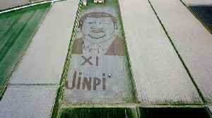 Italy: Land artist ploughs giant portrait of Xi Jinping with tractor [Video]