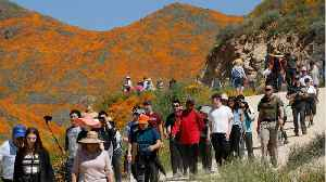 'Poppy Apocalypse' Crowds Descended Upon California City [Video]