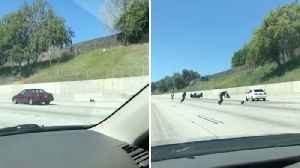 Little Black Dog Causes Havoc On Freeway By Giving Concerned Drivers The Runaround [Video]