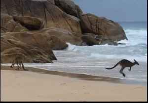 Playful Young Roos Have a Blast on New South Wales Beach [Video]