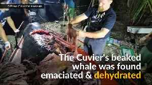 Whale found dead with 88 pounds of plastic in its stomach [Video]