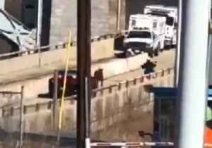 Moove Over: Cow Blocks Traffic on New York Expressway [Video]