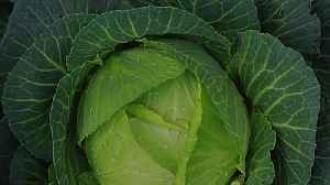 Health Benefits of Cabbage [Video]