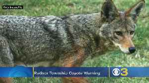 Radnor Township Police Issue Alert After Coyote Spotted [Video]