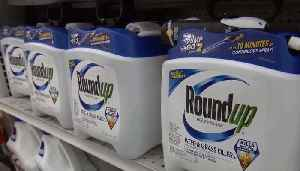 MONSANTO VERDICT: San Francisco Jury Rules Roundup Herbicide Caused Sonoma Man's Cancer [Video]