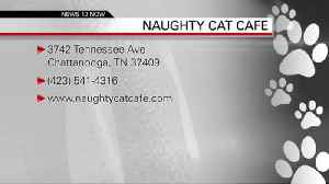 Naughty Cat Cafe 3-19-2019 [Video]