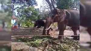 Elephant attacks man as he gets close to take picture in southern India [Video]