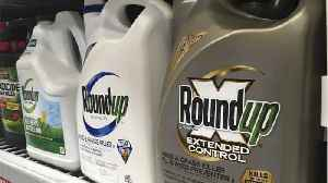 Jury Says Common Weed-Killer Roundup Contributed To Man's Cancer [Video]