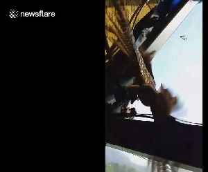 Cuckoo freed after spending all morning trapped inside 250ft high tower crane [Video]
