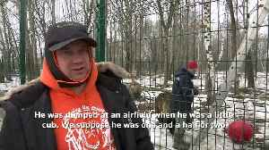 Russian pilots have a pet not everyone could bear [Video]