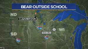 News video: Bear Spotted In Front Of Clearwater County School