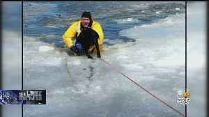 Hamilton Firefighters Save Dog From Freezing Lake Water [Video]