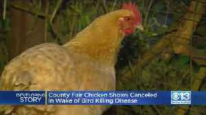 County Fair Chicken Shows Canceled In Wake of Bird-Killing Disease [Video]