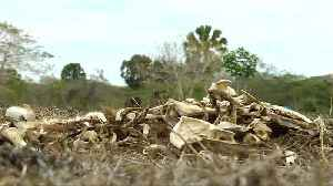 Dominican farmers struggle amidst crippling drought [Video]