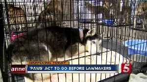 Tennessee PAWS Act would toughen punishment in animal abuse cases [Video]