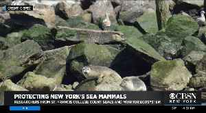 CBSN New York Goes On Seal Watch Expedition [Video]