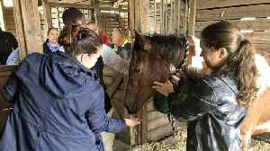 'Neglected' horses seized from property in Palm Beach County are showing improvement [Video]