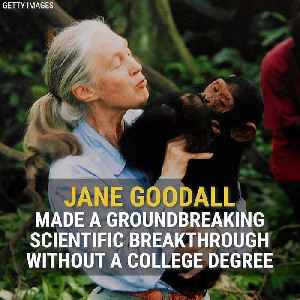 Jane Goodall: The Queen Of The Jungle [Video]