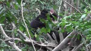 Bears communicate by mimicking each other's facial expressions [Video]