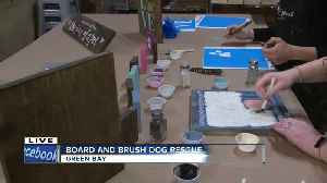 Board & Brush Green Bay teaming up with Lucky 7 Dog Rescue for a fundraising event [Video]