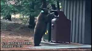 Black bears spotted at Yosemite, rangers issue trash warning [Video]