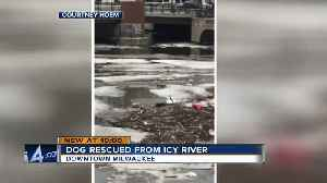 Dog rescued from Milwaukee River after falling through ice [Video]