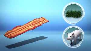 Scientists grow bacon on blades of grass [Video]