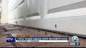 Palm Beach Gardens community concerned over outbreak of poisonous toads [Video]
