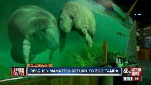 Manatee Critical Care Center is back open at Zoo Tampa after big renovations [Video]
