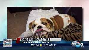 Tucson ranked among best cities for dog owners [Video]