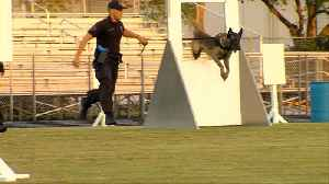 Teams prepare for police k9 competition [Video]