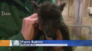 Farm Babies, They'll Make Your Dreams Come True [Video]