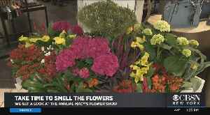 A Look Around Macy's Flower Show [Video]