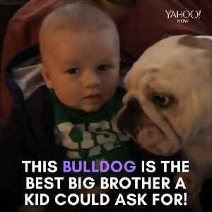 Pit bull is the best big brother ever! [Video]