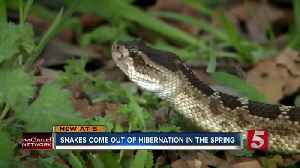Homeowners could see more snakes as they come out of hibernation [Video]