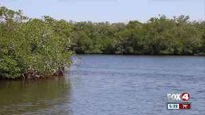 FGCU focusing on water quality through new program [Video]