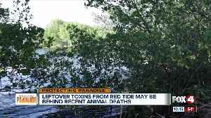 Leftover red tide toxins possible cause of dead marine life [Video]