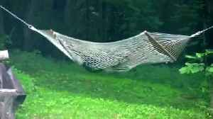 Wild bear has time of its life playing around on hammock [Video]
