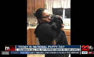 March 23 marks National Puppy Day [Video]
