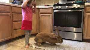 Little Girl Gently Loves on Big Bunny [Video]
