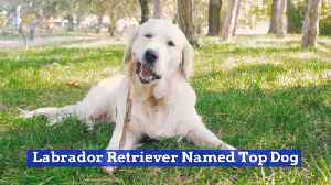 This Dog Has Been Named Top Dog Again [Video]