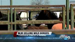 Trying to find good homes for wild horses and burros. [Video]